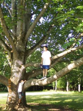 朽木ワークキャンプ54(160723・24) (53)